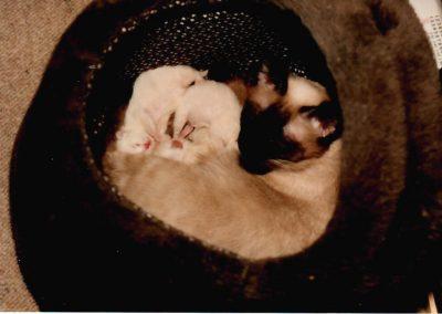 Felis mit ihren Kitten